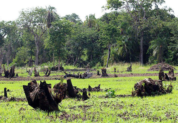 Restoring Habitats & Fighting Climate Change