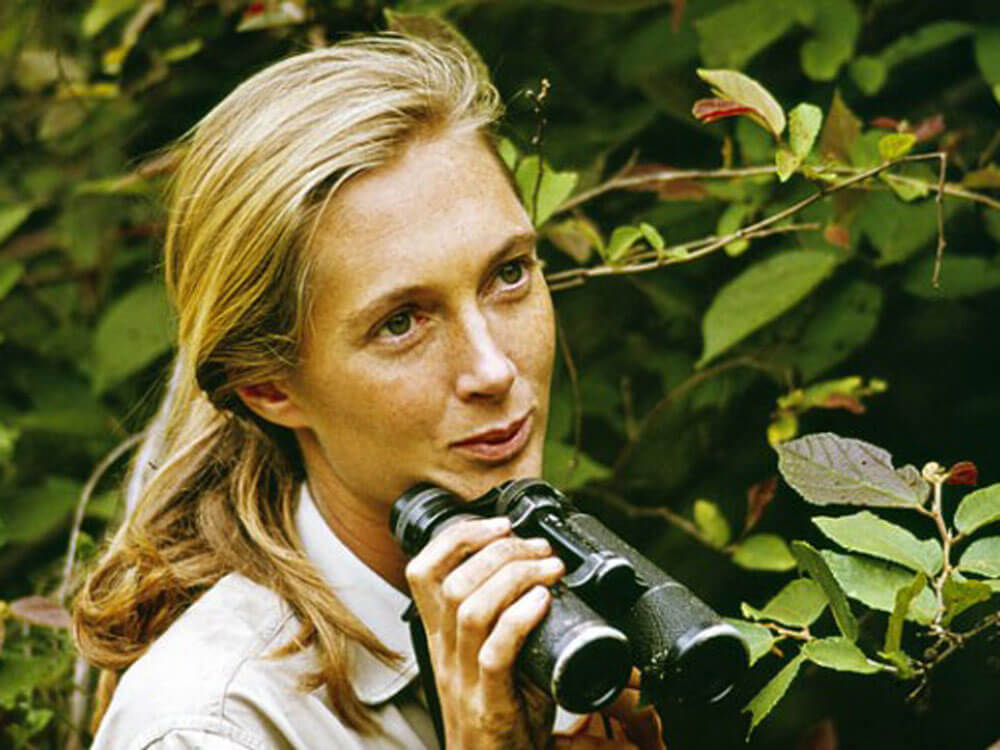 about jane   the jane goodall institute